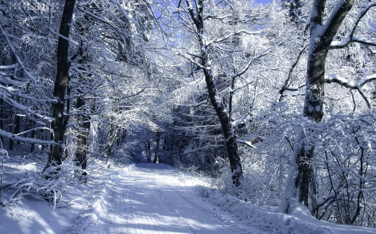 ws_Snowy_Forest_Road_Winter_1920x1200